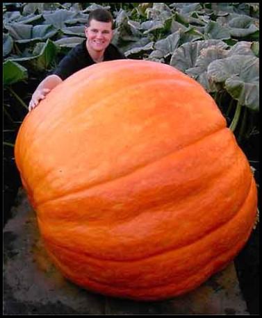 pumpkin_88f